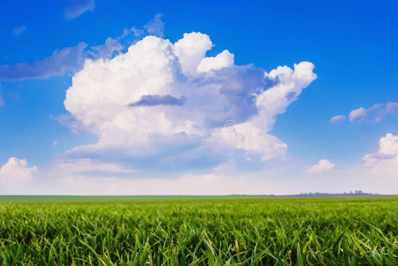 在蓝天背景的白色卷曲云彩  夏天风景- 免版税库存照片