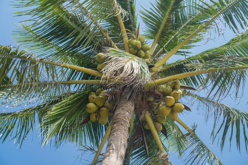 在蓝天,底视图的棕榈树 免版税库存照片