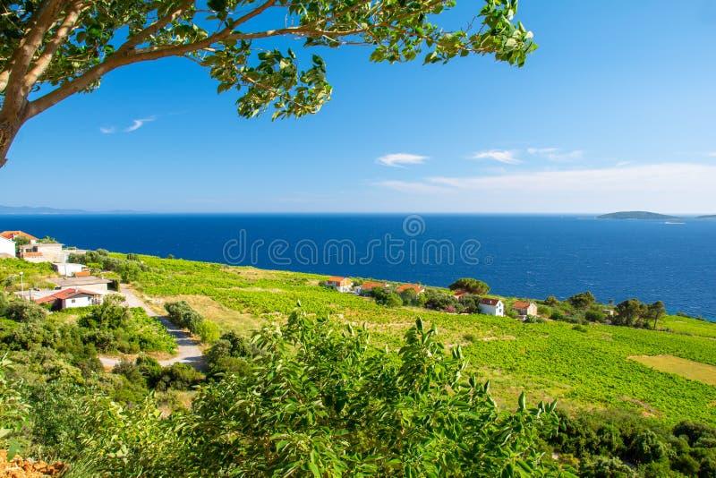 在蓝色亚得里亚海的看法和在Peljesac半岛,达尔马提亚,克罗地亚的绿色领域 免版税库存照片