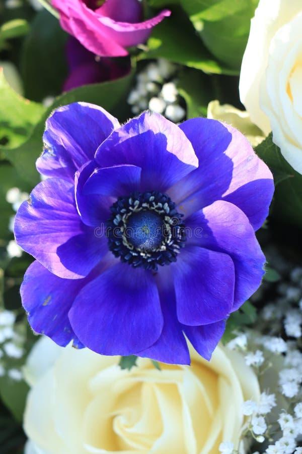 在蓝色和白色的新娘花束 图库摄影