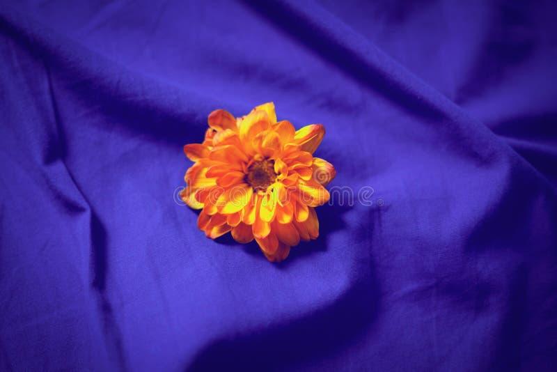 在蓝色床单的黄色花 免版税库存图片