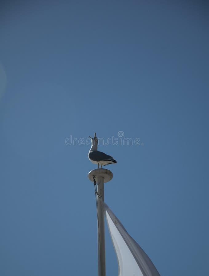 在蓝色明亮的天空的海鸥 免版税图库摄影