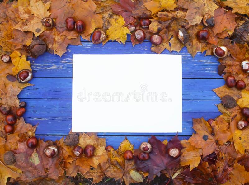在蓝色木板的白色空的纸板料有秋天叶子和栗子的 免版税库存图片