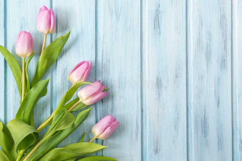 在蓝色木背景的桃红色郁金香 免版税库存照片