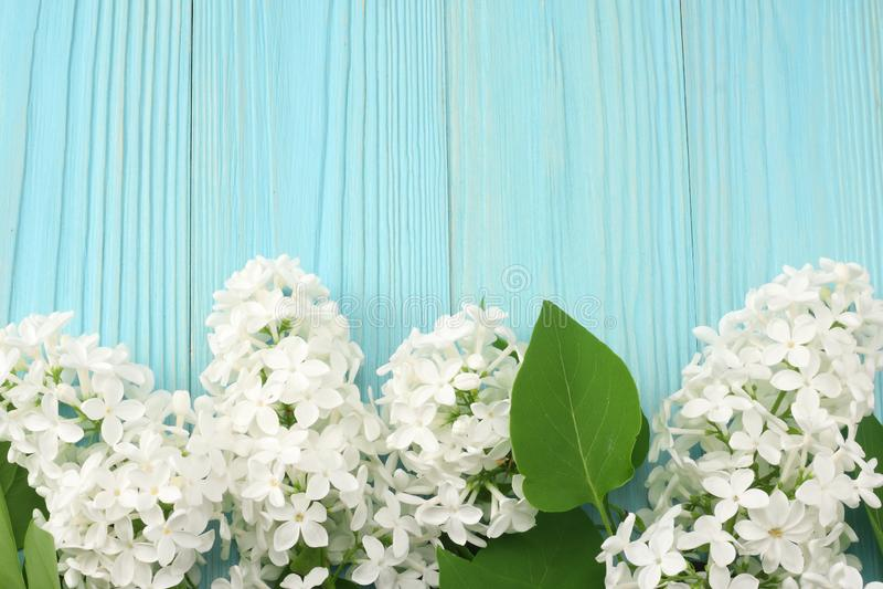 在蓝色木背景的白色淡紫色花 与拷贝空间的顶视图 库存图片
