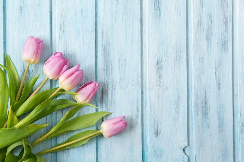 在蓝色木背景,您的文本的模板的左角的桃红色郁金香 库存照片