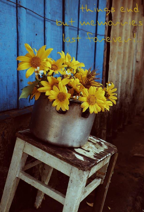 在蓝色木,抱歉的背景的狂放的向日葵 库存图片