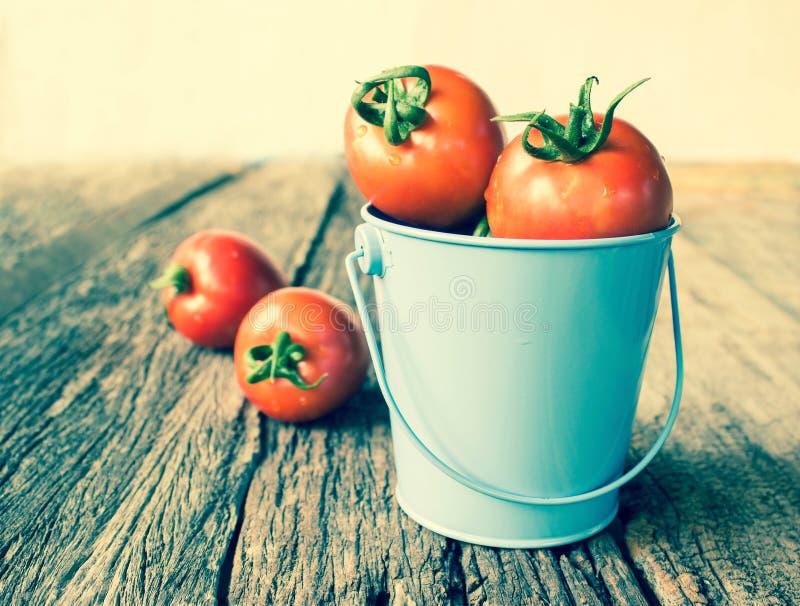 在蓝色桶的蕃茄 免版税库存照片
