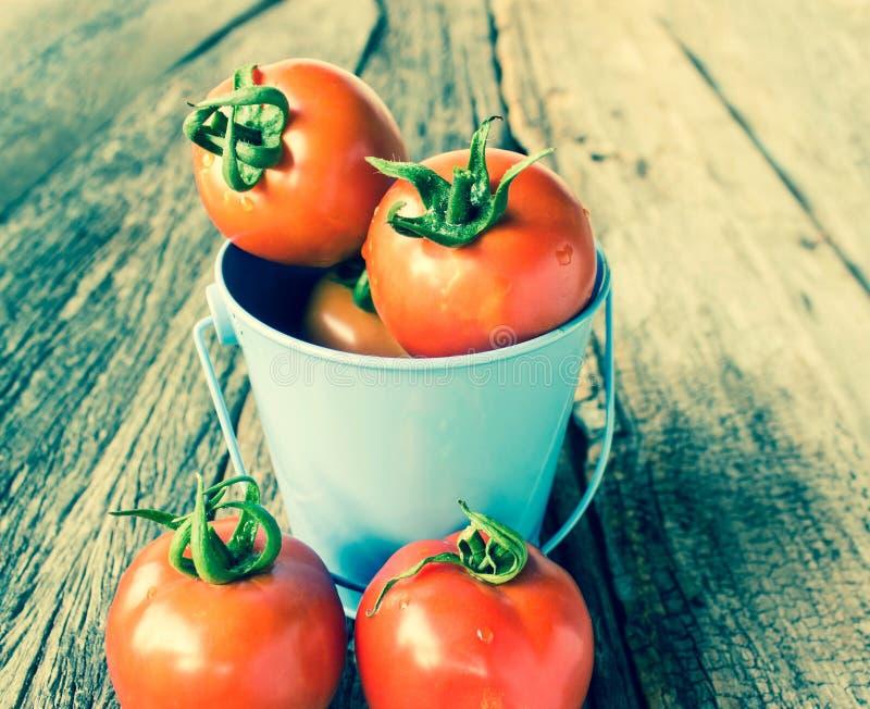 在蓝色桶的蕃茄 库存照片