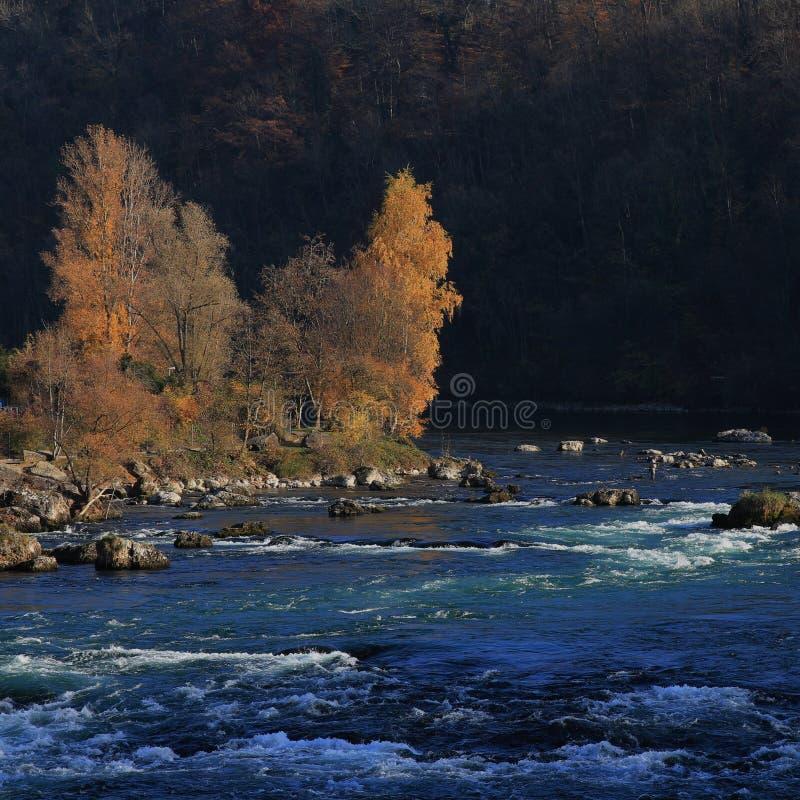 在蓝色河莱茵河的岸的金黄树 库存照片