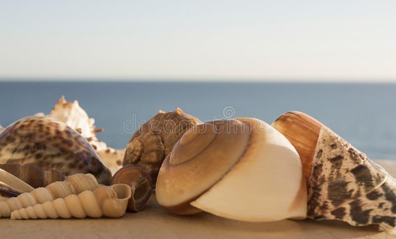 在蓝色海背景的美丽的景色不同的大小的多彩多姿的贝壳  图库摄影