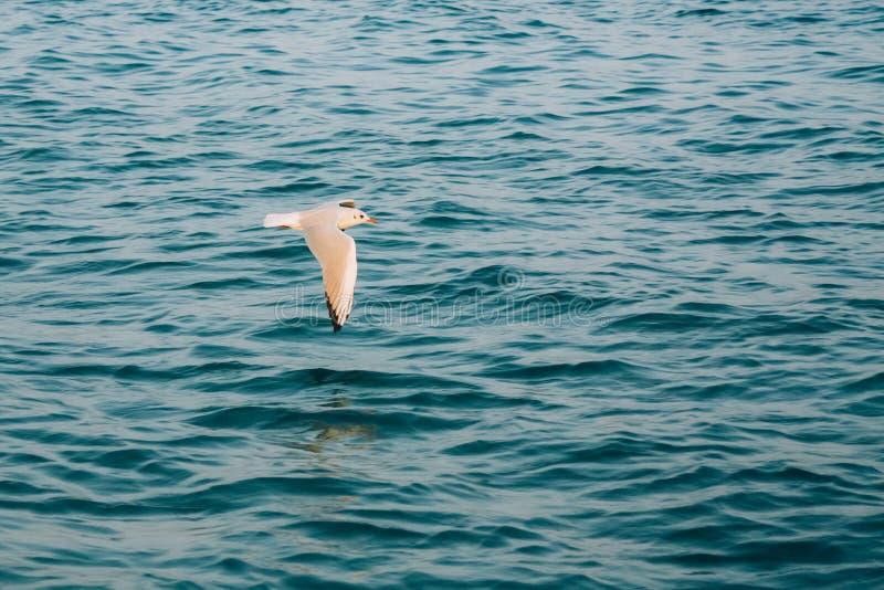 在蓝色海洋海的飞行海鸥 免版税库存图片