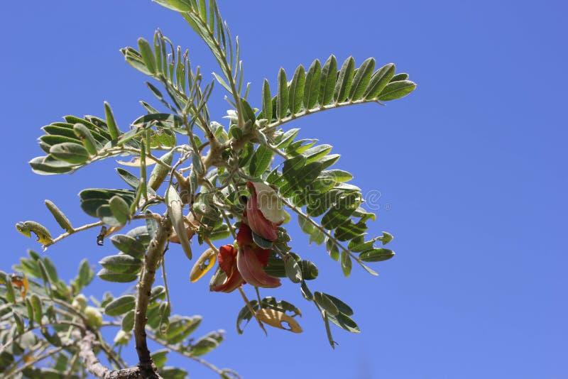 在蓝色的热带树 免版税库存照片