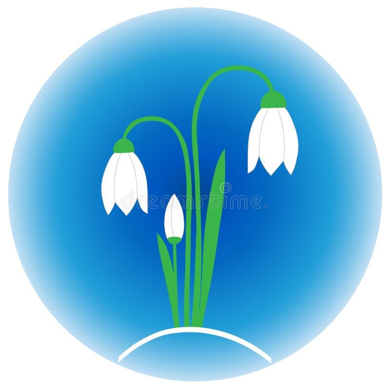 在蓝色背景的嫩snowdrops,春天的早期的标志,唤醒自然 库存例证
