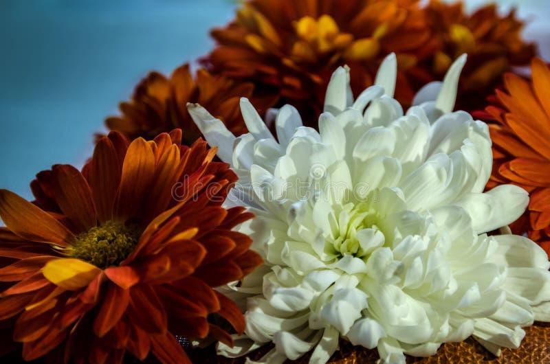 在蓝色背景的美丽的花 库存照片