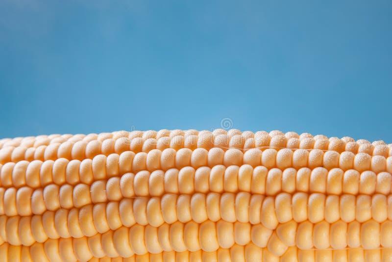 在蓝色背景的鲜美煮沸的玉米蒸汽 免版税库存图片