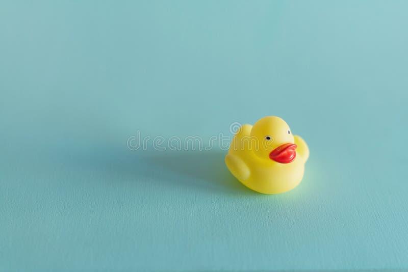 在蓝色背景隔绝的一只黄色橡胶鸭子 r 库存照片