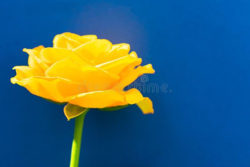 在蓝色背景隔绝的黄色玫瑰 r 库存图片