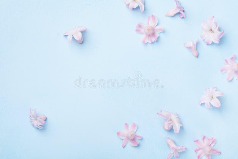 在蓝色背景顶视图的美丽的桃红色花 单独冻结的结构树 平的位置样式 母亲或妇女天贺卡 库存照片