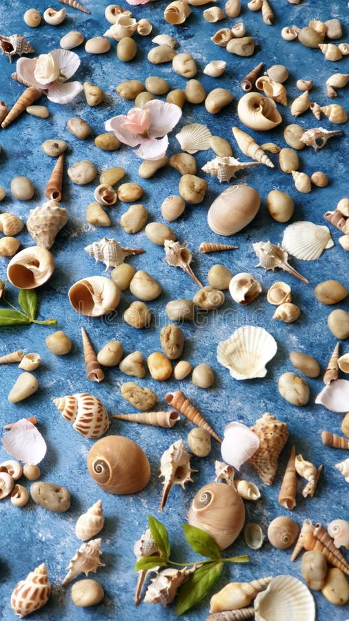 在蓝色背景,海洋海洋夏天海假日sunglass电话白色凉鞋的贝壳成珠状海滩自然背景 库存图片