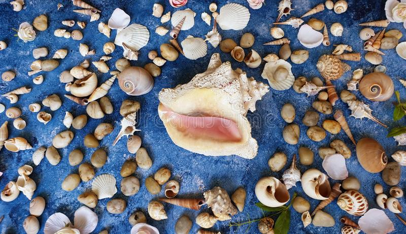 在蓝色背景,海洋海洋夏天海假日sunglass电话白色凉鞋的贝壳成珠状海滩自然背景 免版税库存照片