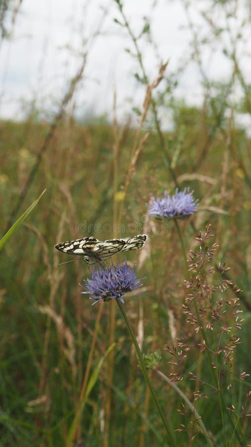 在蓝色花的蝴蝶 免版税图库摄影