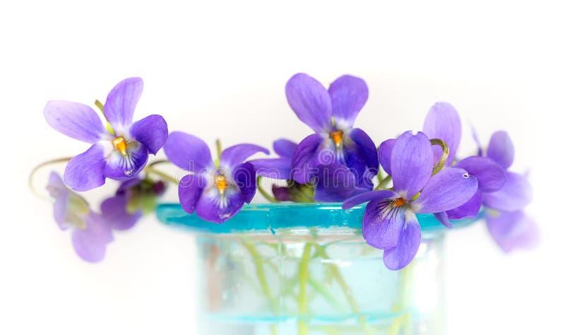 在蓝色玻璃花瓶的紫罗兰 免版税库存图片