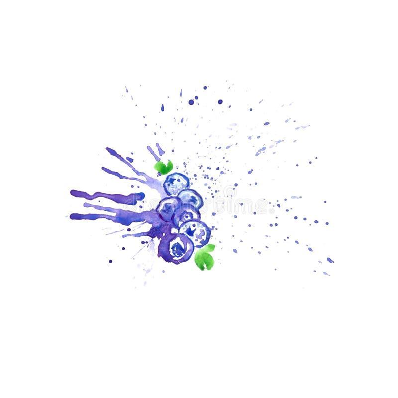 在蓝莓汁飞溅的水彩蓝莓,隔绝在白色背景 夏天手画莓果 皇族释放例证