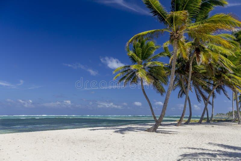 在蓬塔Cana海滩的棕榈树 库存图片