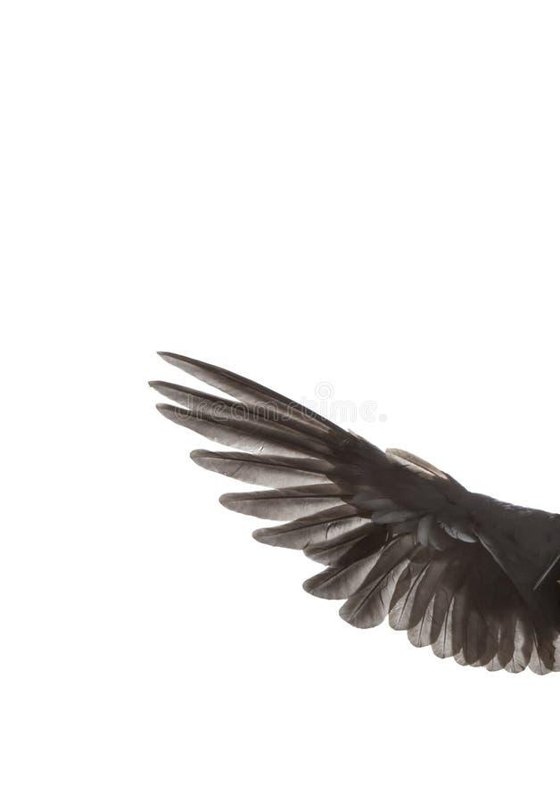 在蔓延的白色的鸟翼末端 库存例证