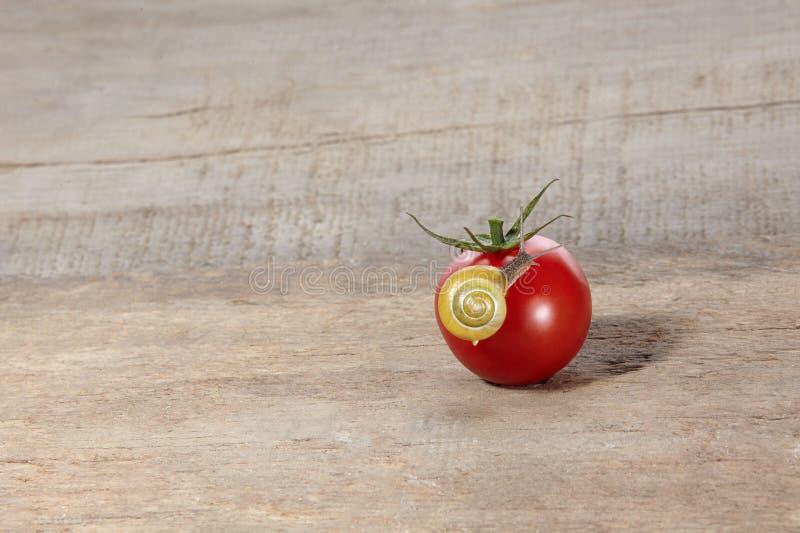 在蕃茄的蜗牛 库存图片