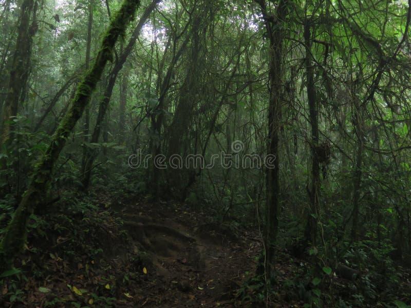 在薄雾的密林雨林在中美洲 免版税库存图片