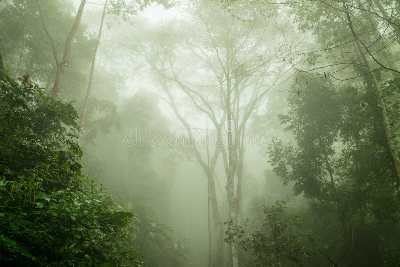 在薄雾的有雾的雨林,软的焦点 免版税库存照片