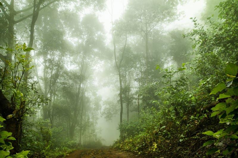 在薄雾的有雾的雨林,软的焦点 库存图片