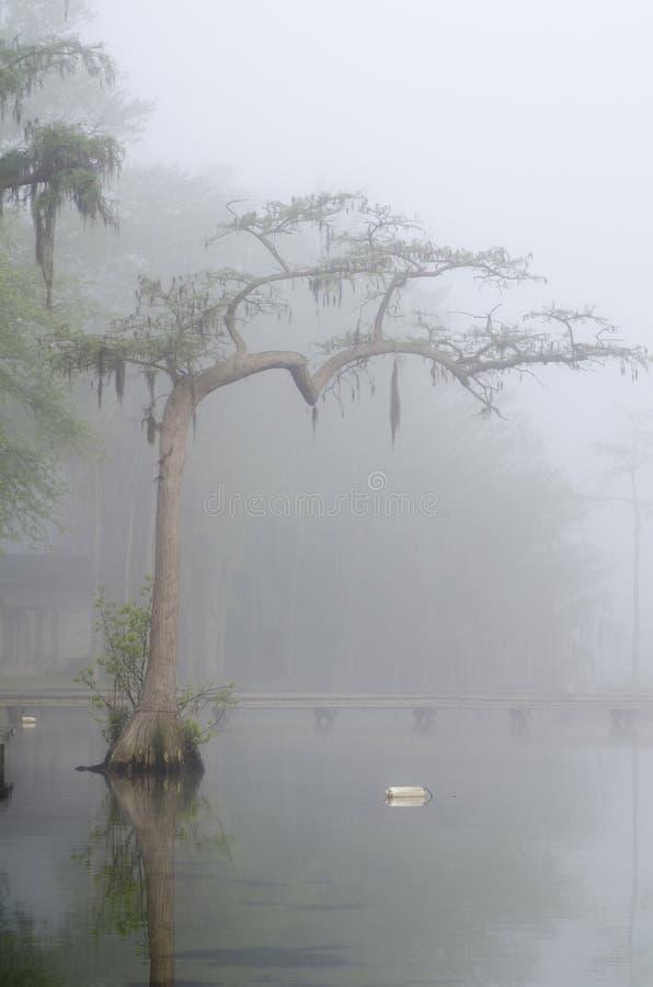 在薄雾的柏树剪影在湖 库存照片