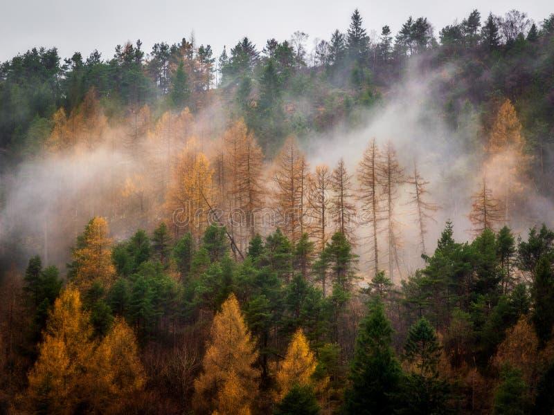在薄雾的橙树在陡坡 图库摄影