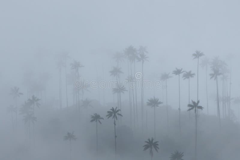 在薄雾的蜡榈, Cocora谷,哥伦比亚 免版税库存图片