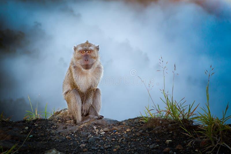 在薄雾的猴子 免版税库存照片