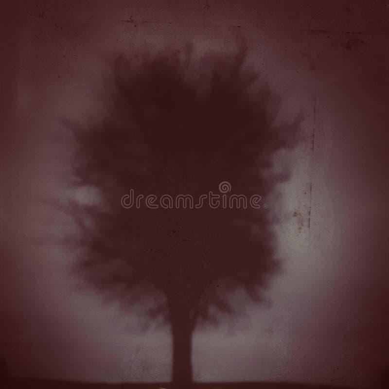 在薄雾的黑暗的树 免版税库存照片