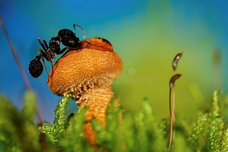 在蘑菇的蚂蚁 免版税库存图片
