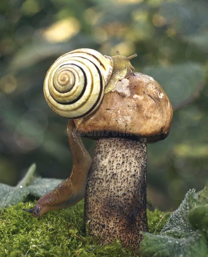 木头包括有名言群,季节,植物,秋天,图片,爬行,动物区系青蛙王子本质图片