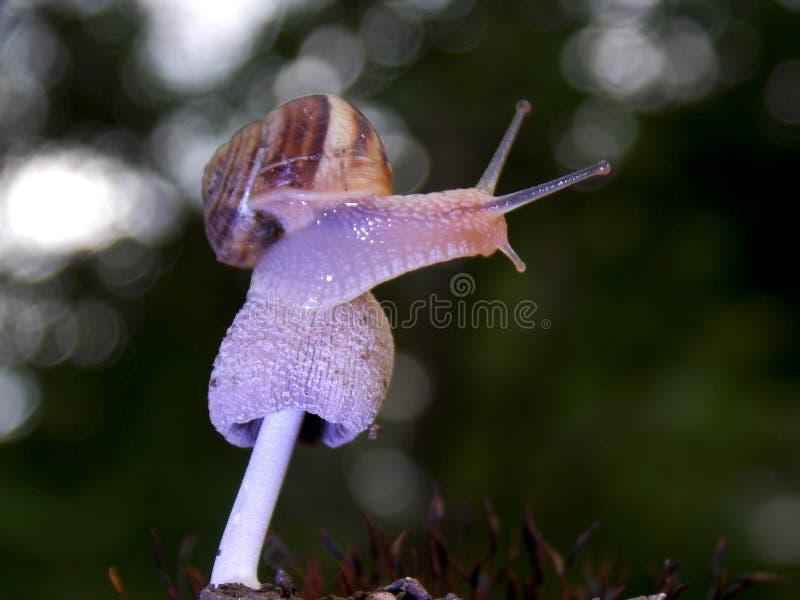 在蘑菇的蜗牛 免版税库存图片
