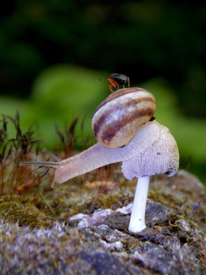 在蘑菇的蜗牛 库存图片
