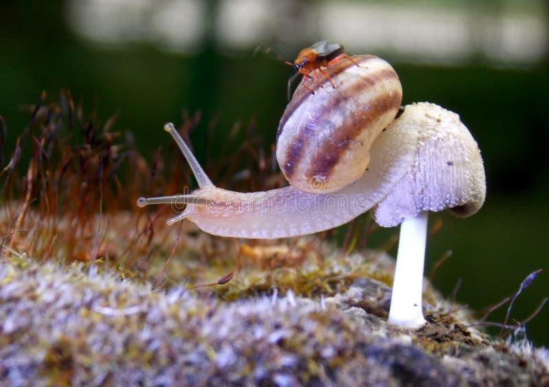 在蘑菇的蜗牛 免版税库存照片