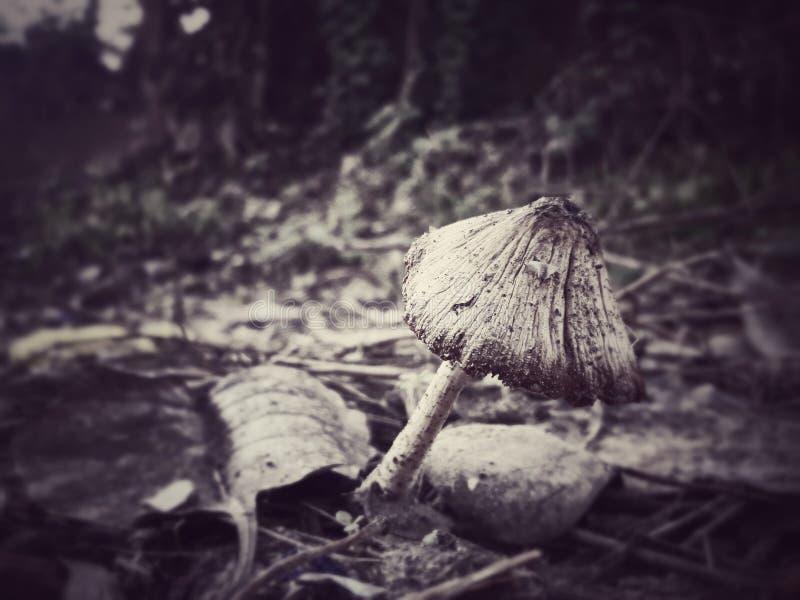 在蘑菇阴影笼罩下的Peepal叶子 库存图片