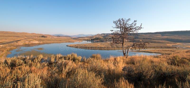 在虚张声势的孤立树在弯上在海登谷的黄石河在黄石国家公园在怀俄明 免版税库存图片
