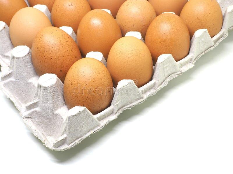 在蛋壳孤立的鸡蛋在白色 库存照片