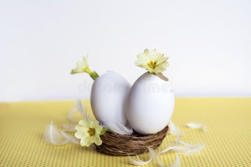 在蛋壳的黄色花 免版税库存图片