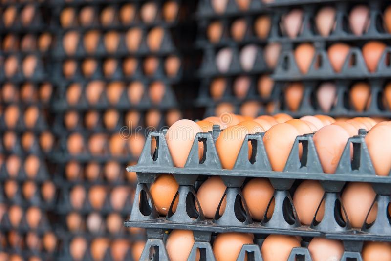 在蛋盘区包裹的新鲜的鸡蛋从packa的一个养鸡场 免版税库存照片