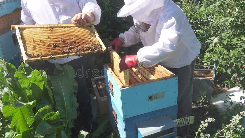 在蜂房的两位蜂农工作 库存图片